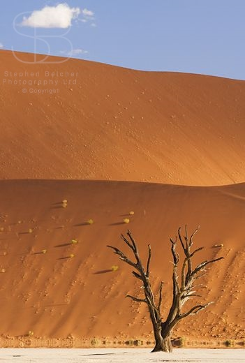 desert, vertical, blue sky, orange, sand, white, cracks, bare trees,  shadows, Dead Pan, Dead Vlei, Namib National Park, Namibia