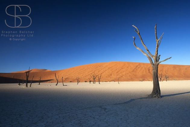 desert, horizontal, blue sky, orange, sand, white, cracks, bare trees, shadows, Dead Pan, Dead Vlei, Namib National Park, Namibia