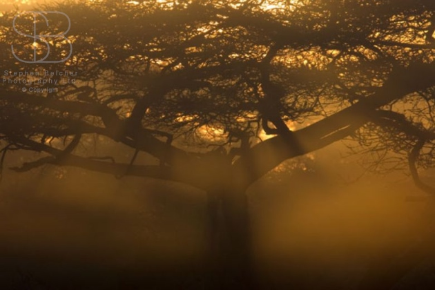 trees, yellow, brown, haze, mist, tree, branches, sunlight