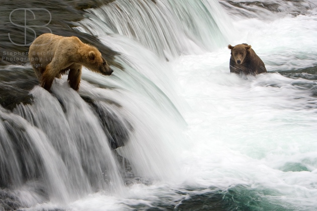 brown bears. horizontal, two, water, waterfall, no sky, standing, sitting, flowing water, Brooks falls, Katmai National Park, Alaska, Grizzly bears (Ursus arctos)